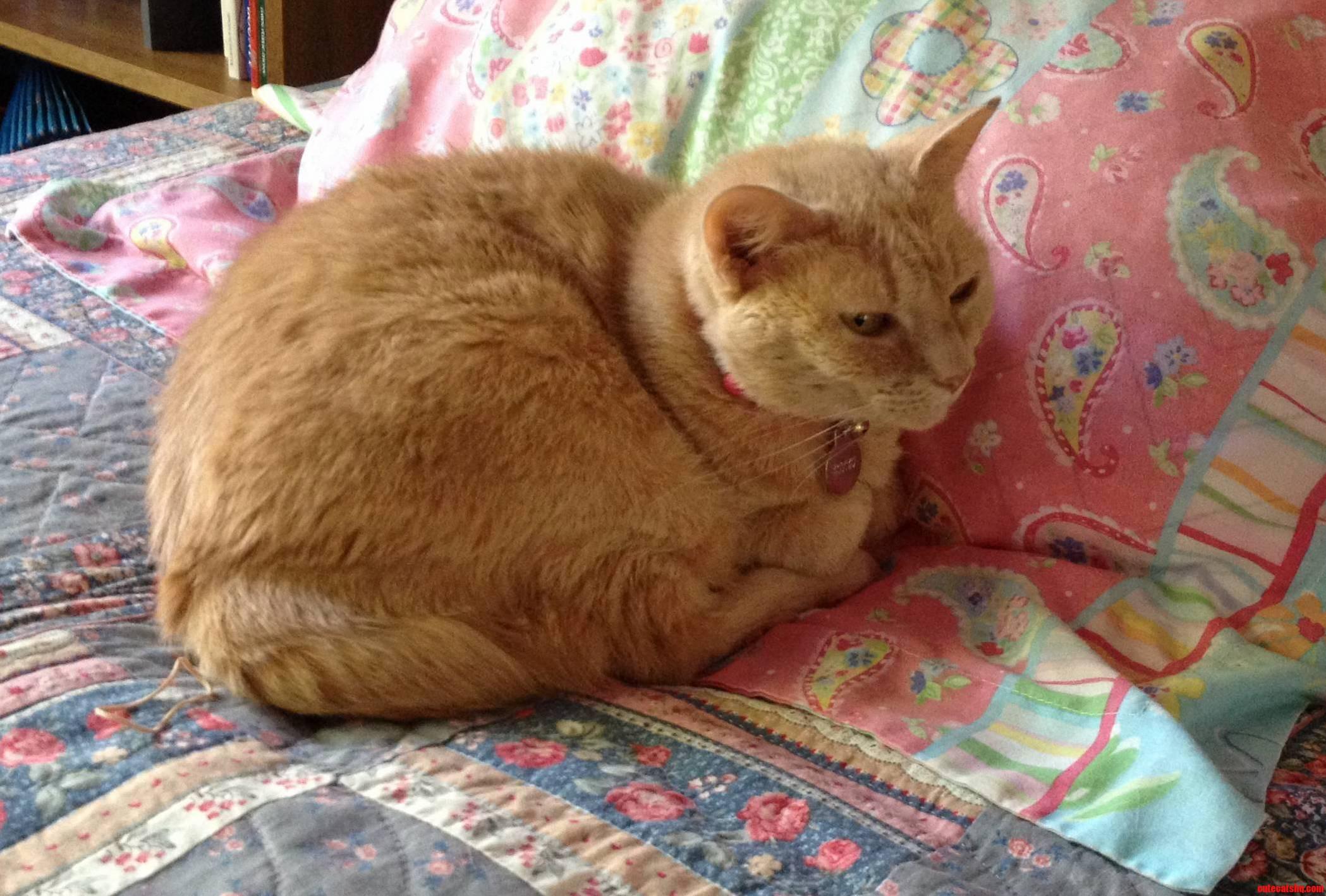 My Wise Old Kitty Pumpkin