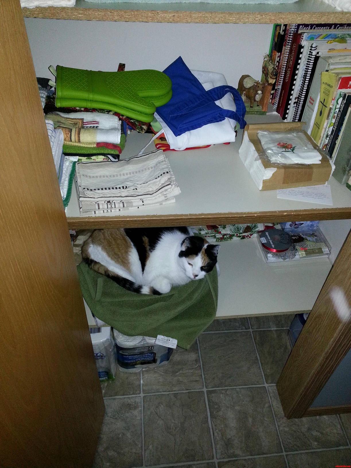 Nesting Instinct