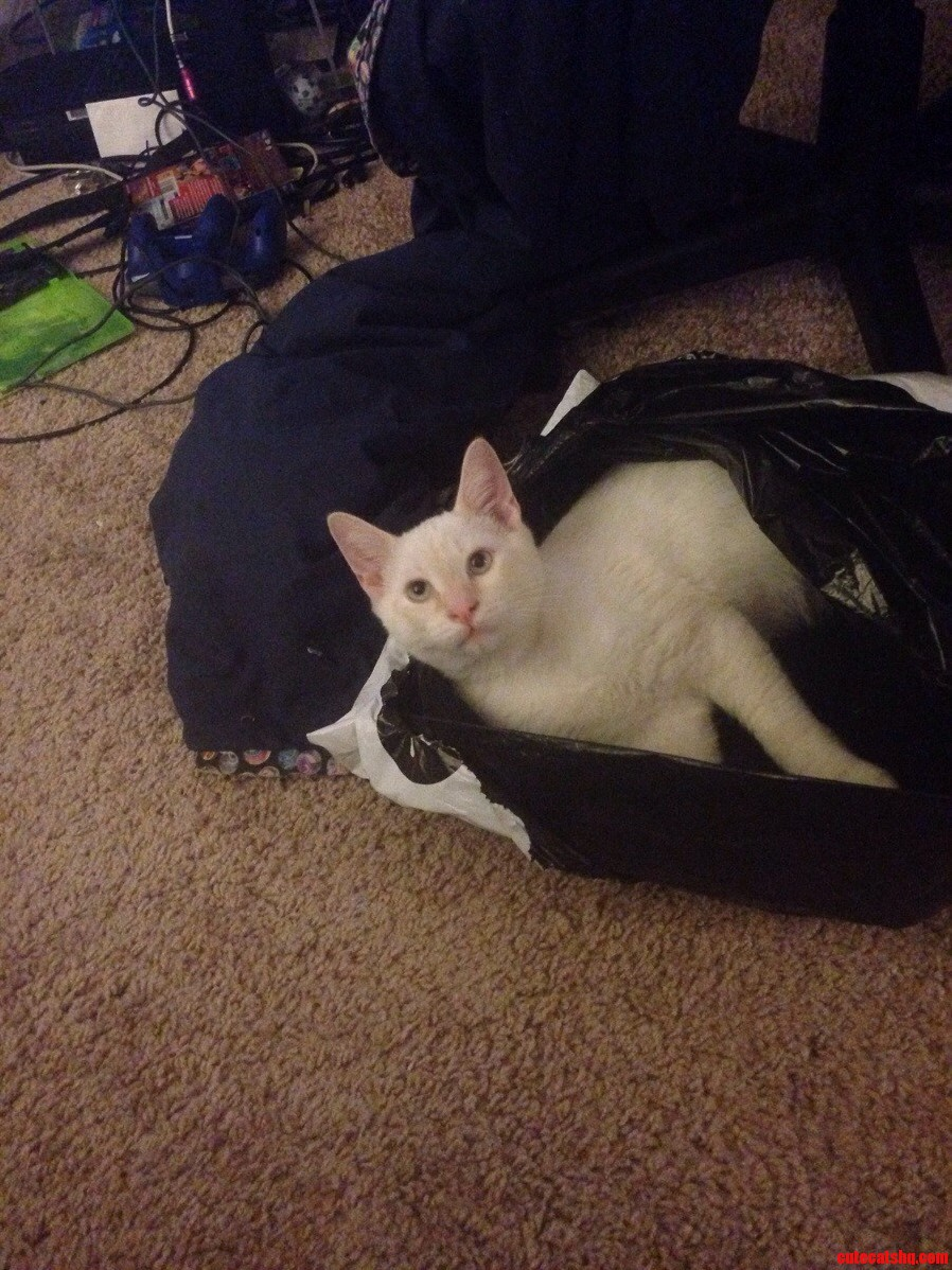 Now Its My Bag