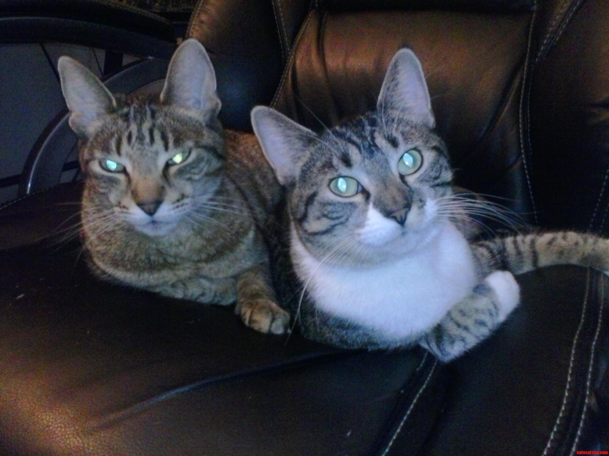 Operation Karma Kitties To The Rescue