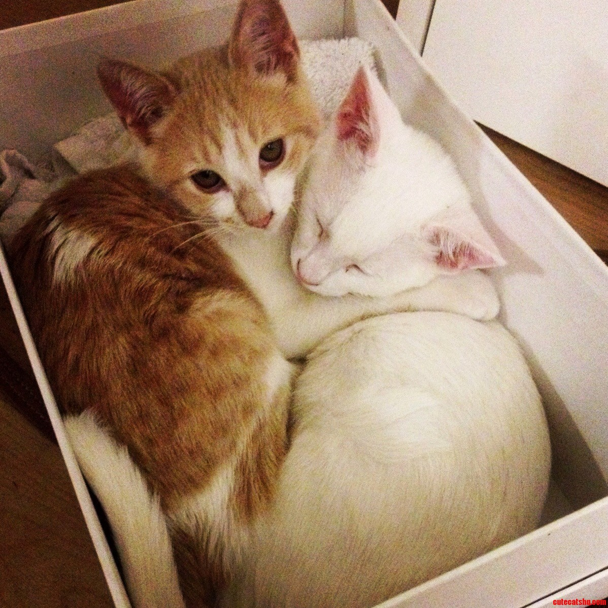 Packed Like Kittens In A Cookie Box.