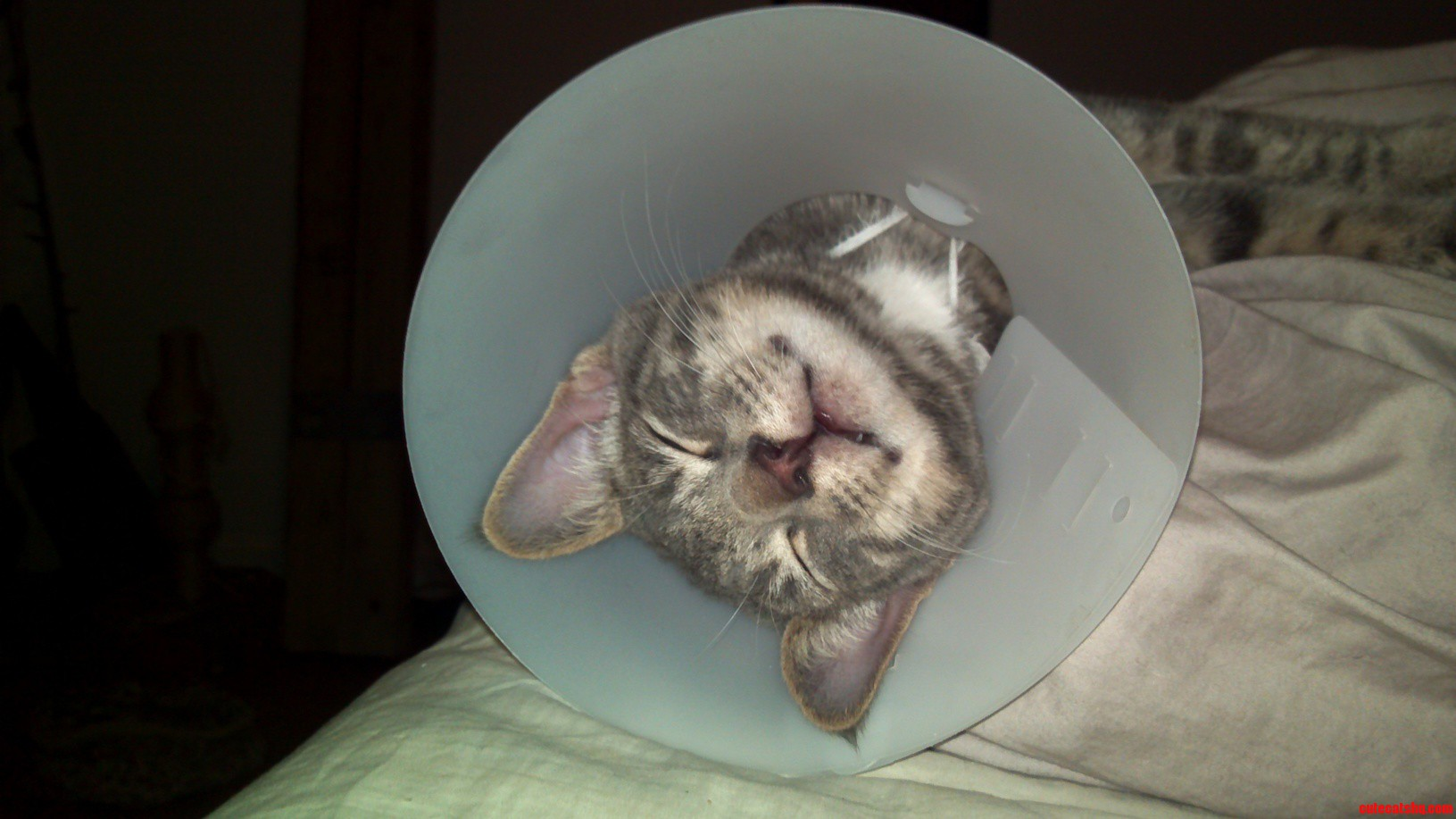 Poor Druged Post-Surgery Albus
