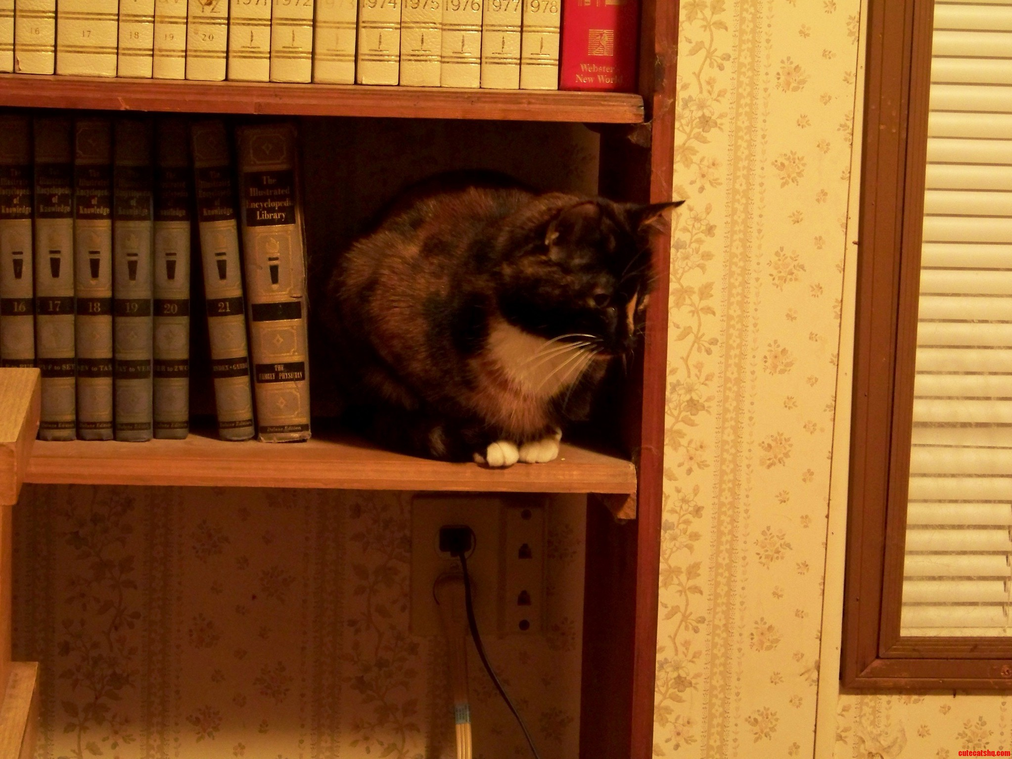 Psycho Thinks Shes A Book-End