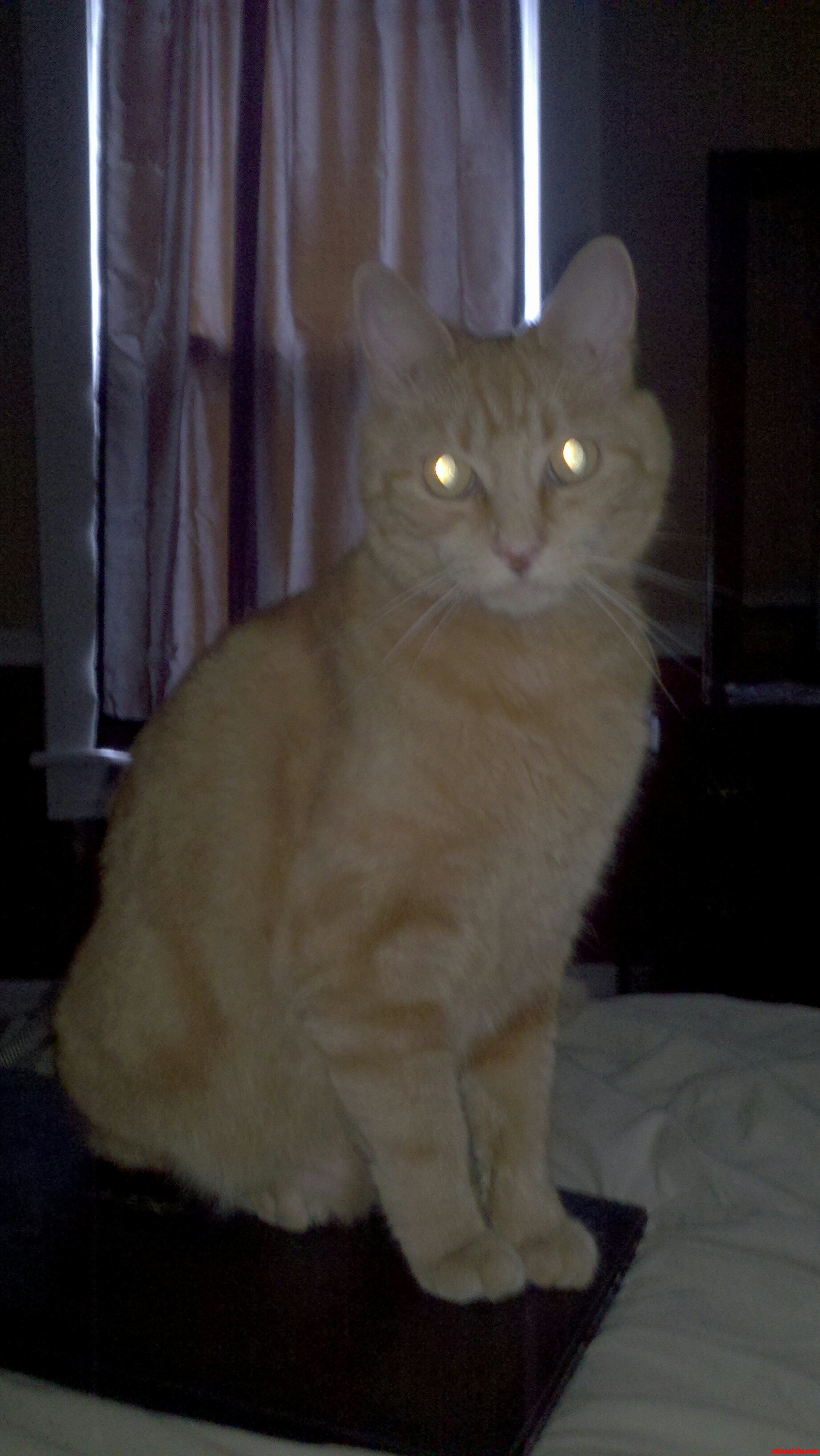 Pwetty Kitty
