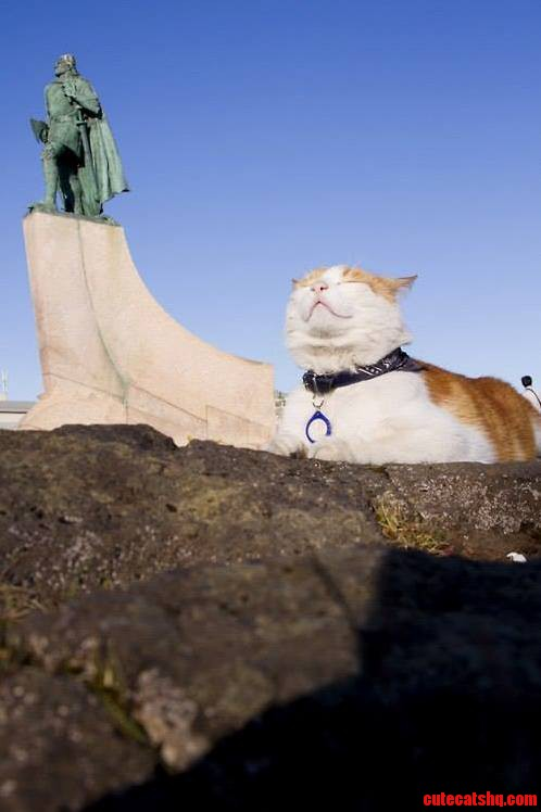Regal Kitty Is Pleased With Its Kingdom.