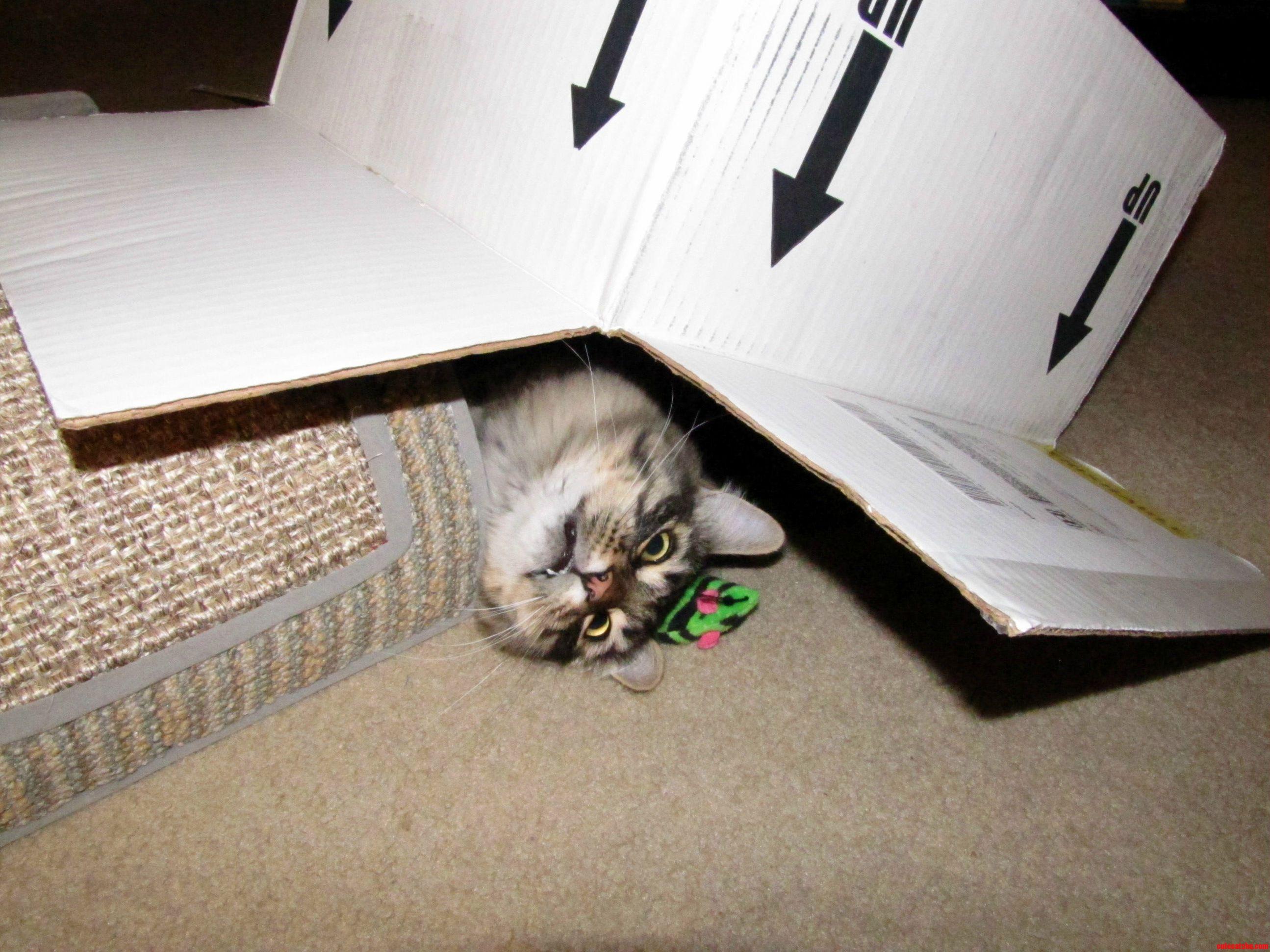 Resident Box Fiend.