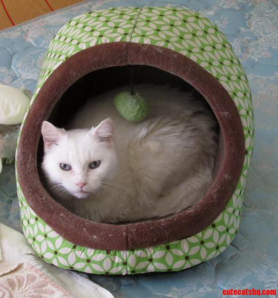 Scully Likes Her New To Her Mini Cat Hut.
