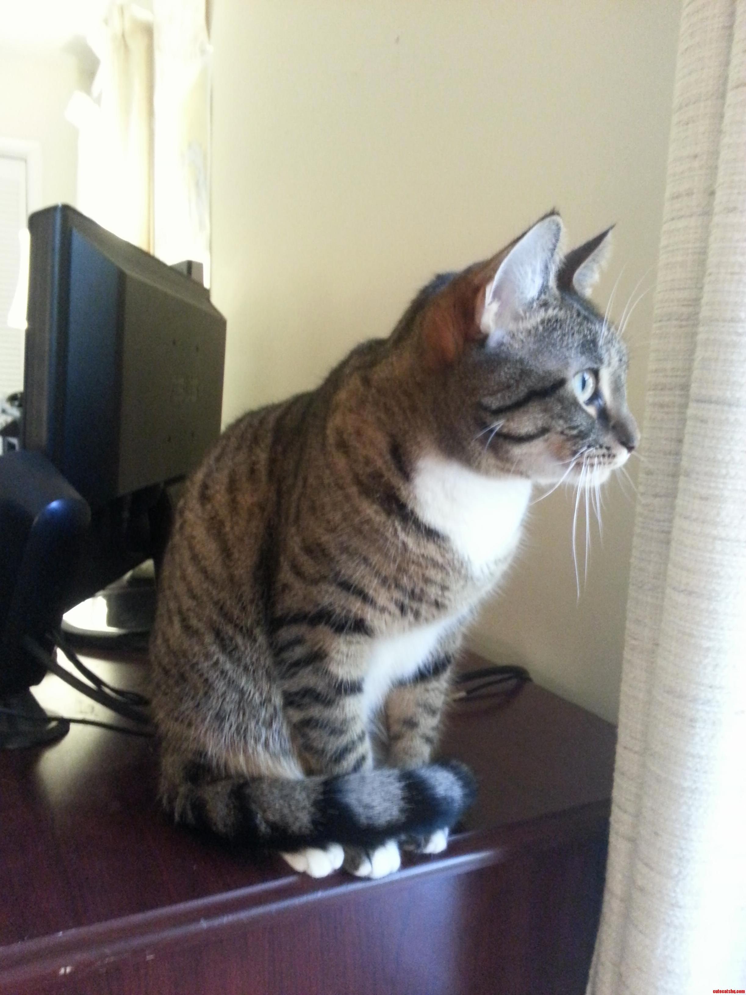 She Always Curls Her Tail Around Her Feet When Watching Squirrels.