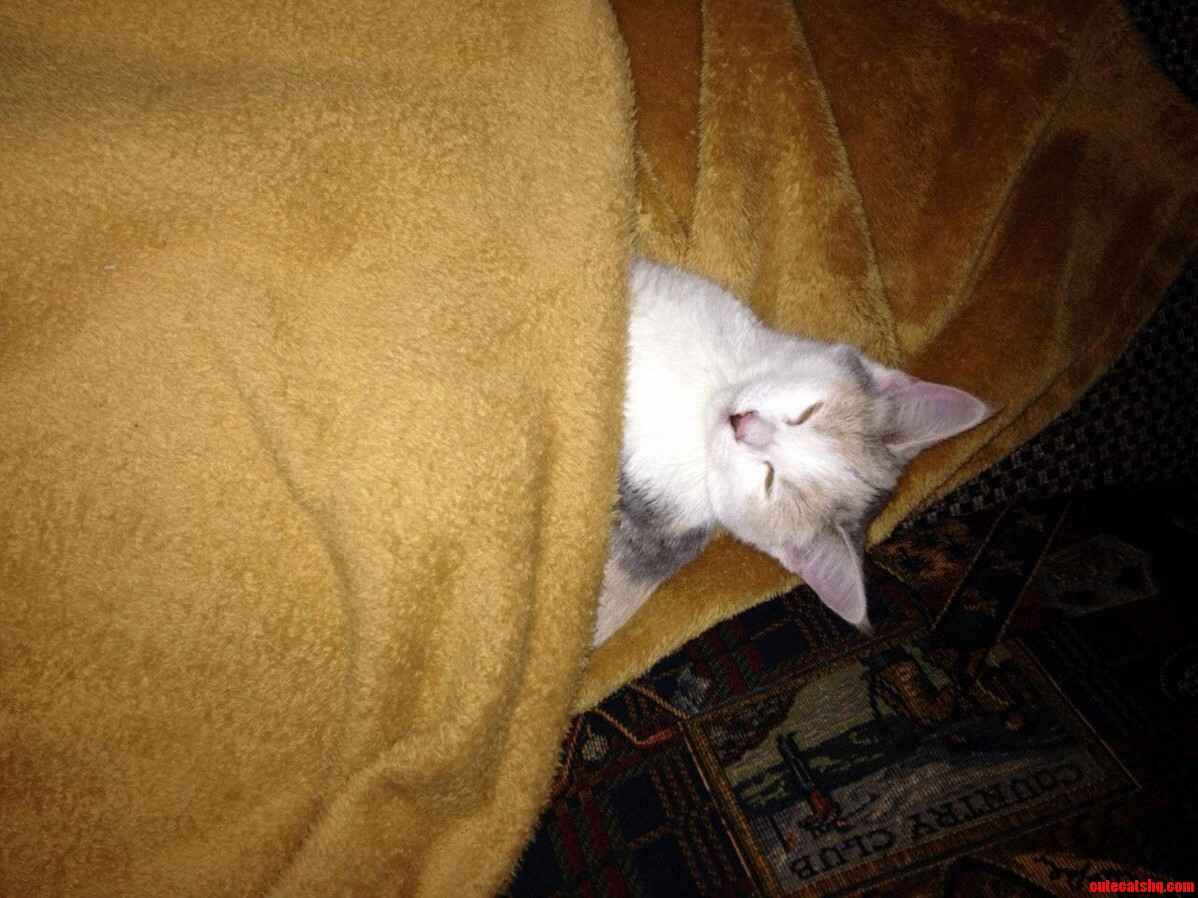 She Wont Go To Sleep Until She Has Been Tucked In.