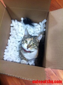 Since Were Posting Cats In Boxes I Present Mimi Looking For Pets While Unpacking A Work Order.