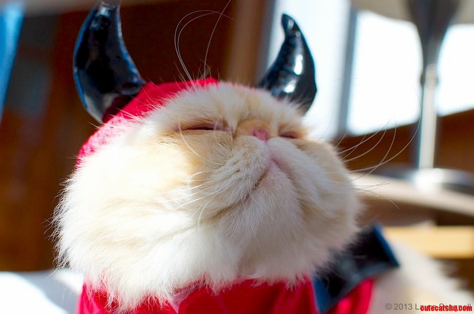 Sir Lucifur Fluffypants Is Really In His Element With This Costume…