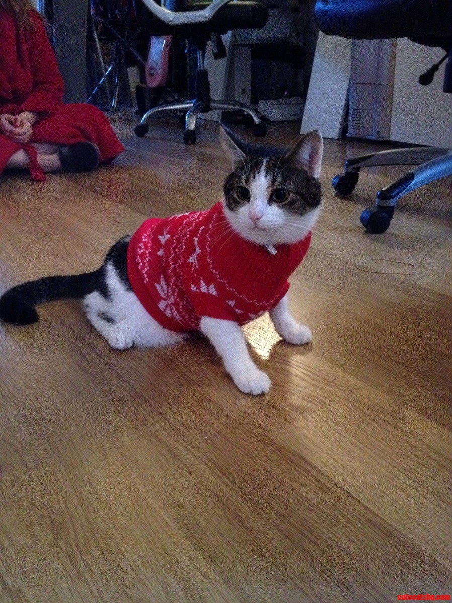 So My Girlfriend Bought A Jumper For Our Cat