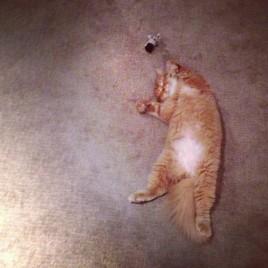 Someone Had A Tough Day
