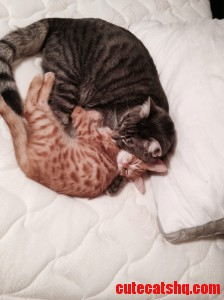 Tabby Brothers.