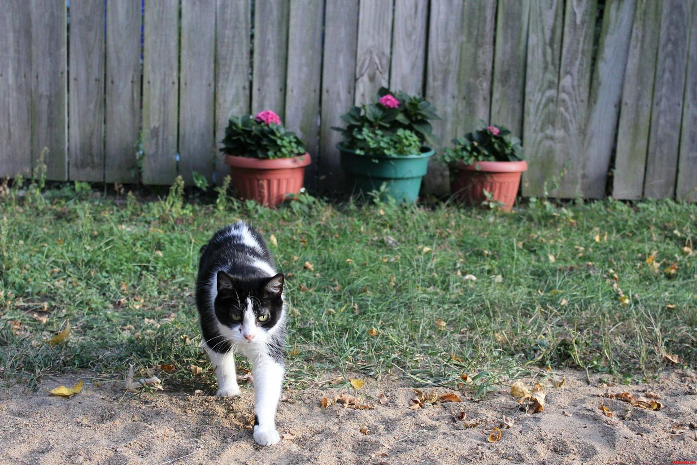 Tammy Walking By Flowers