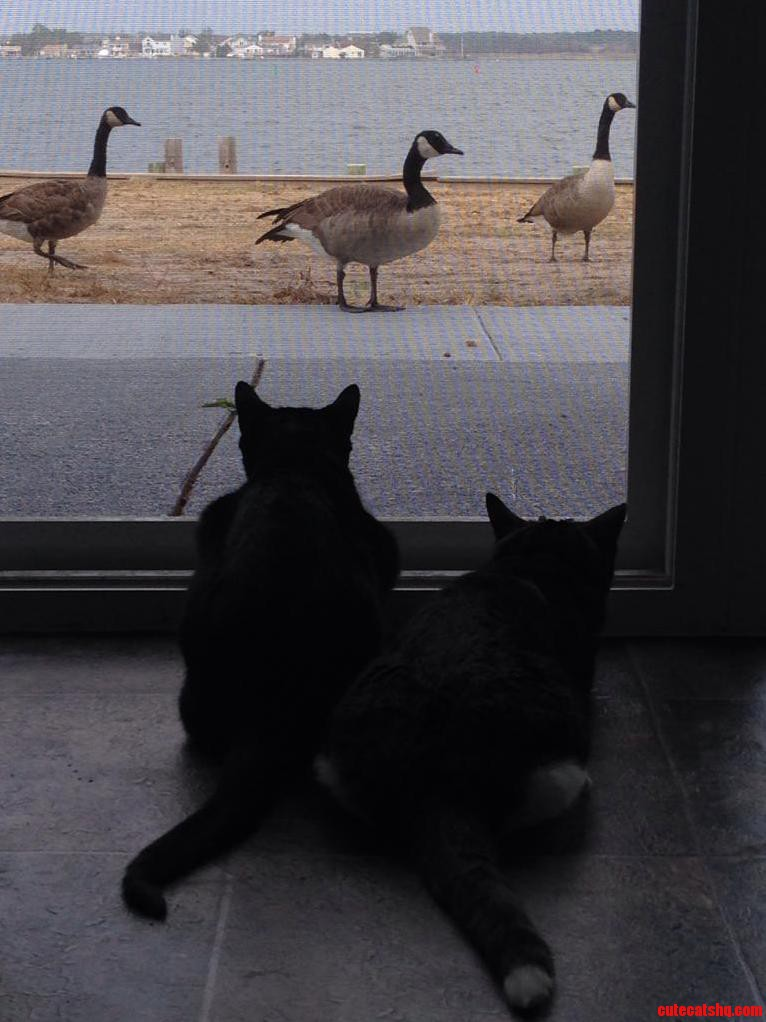 The Interesting Scenery Has Made Our Cats Transition Into Our New Home A Lot Smoother