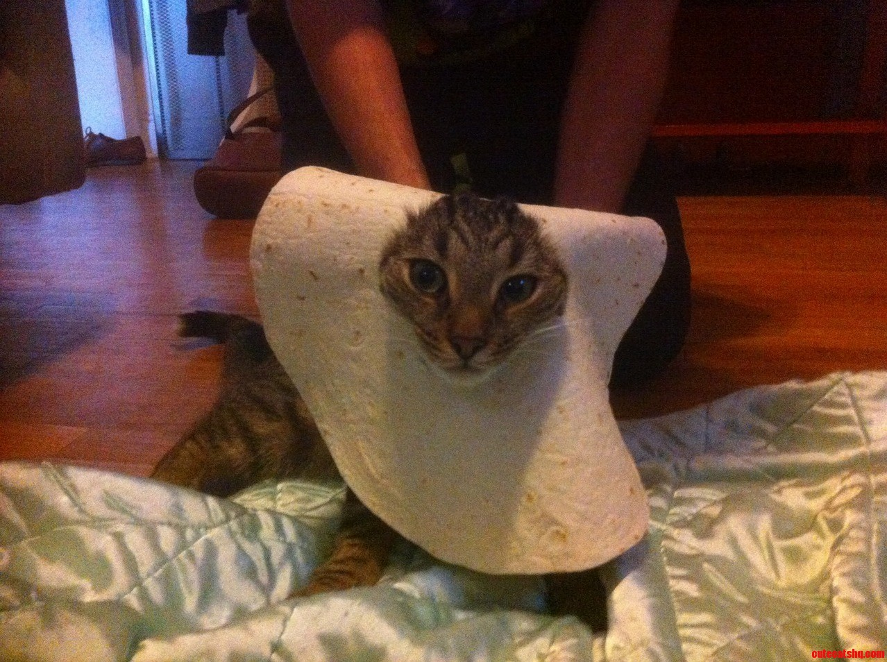 The Mexican Cousin Of Breadcat