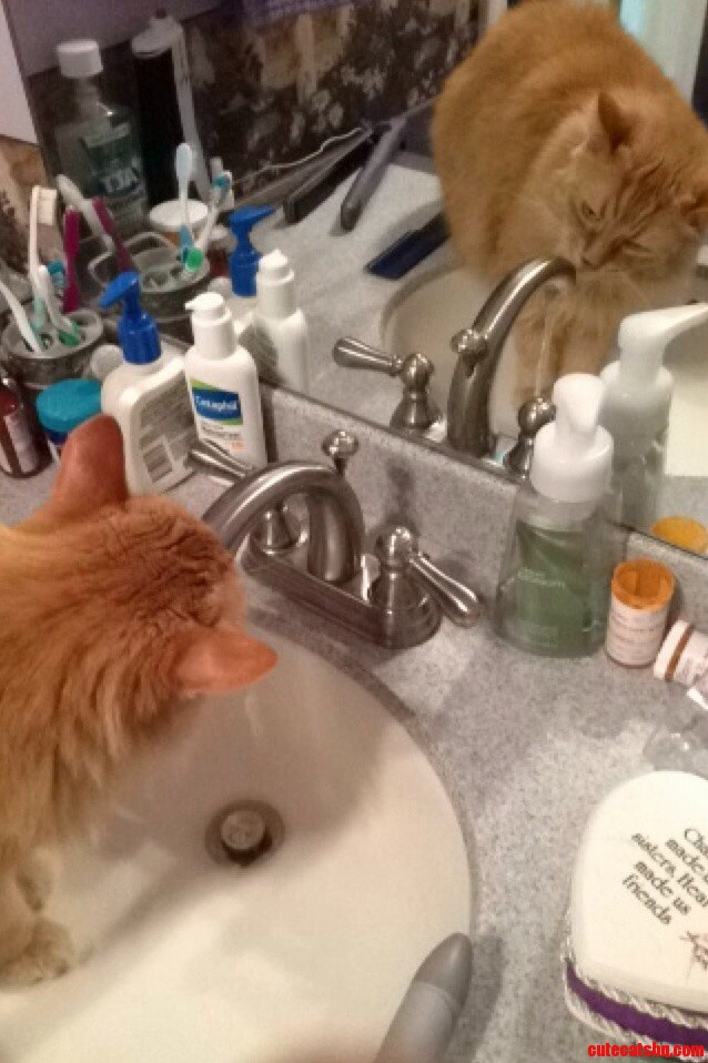 The Only Way My Moms Asshole Cat Will Drink… Every. Damn. Time.