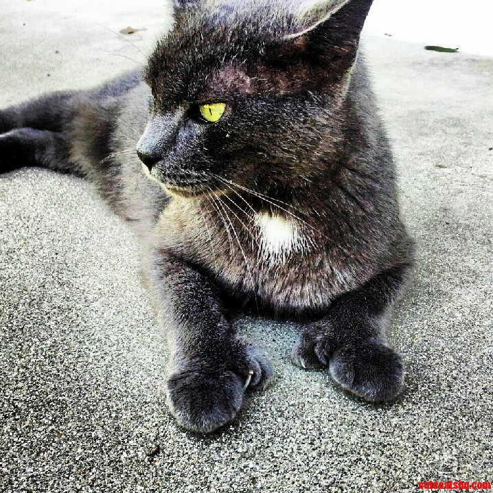 The Polydactyl Cat That Hangs Around My Front Porch.
