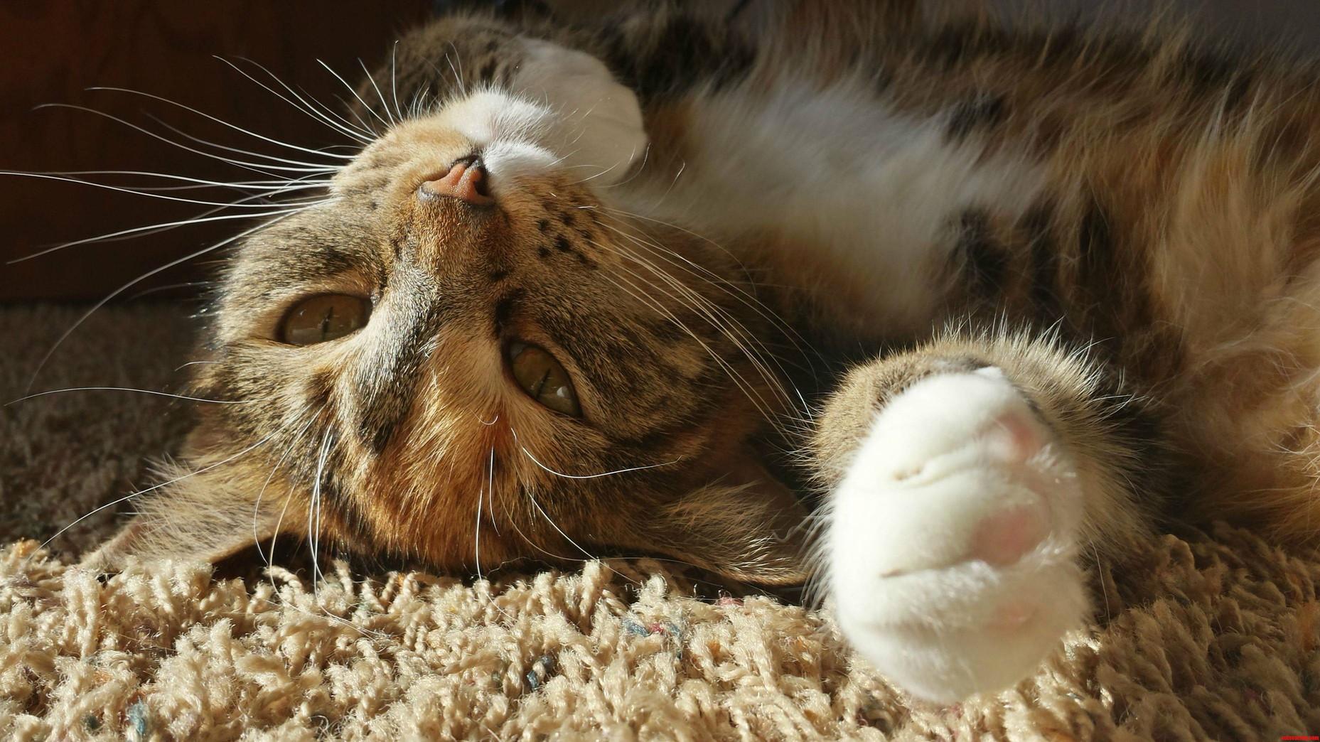 The Sunbather