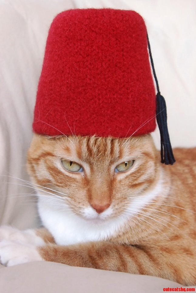 This Cat Is Trying Out For The Shriners