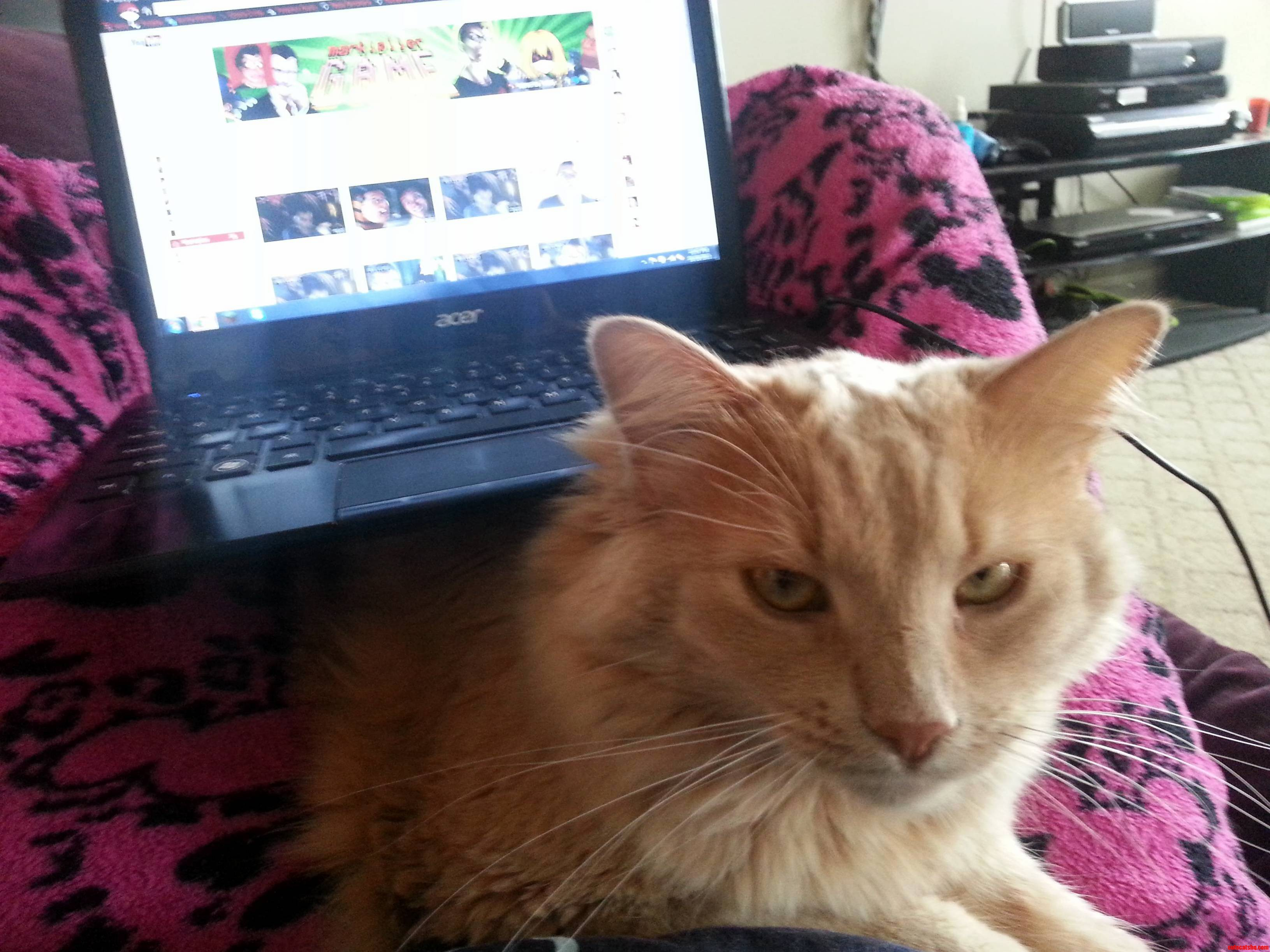 This Is How Fluffy And Me Watch Youtube Together.