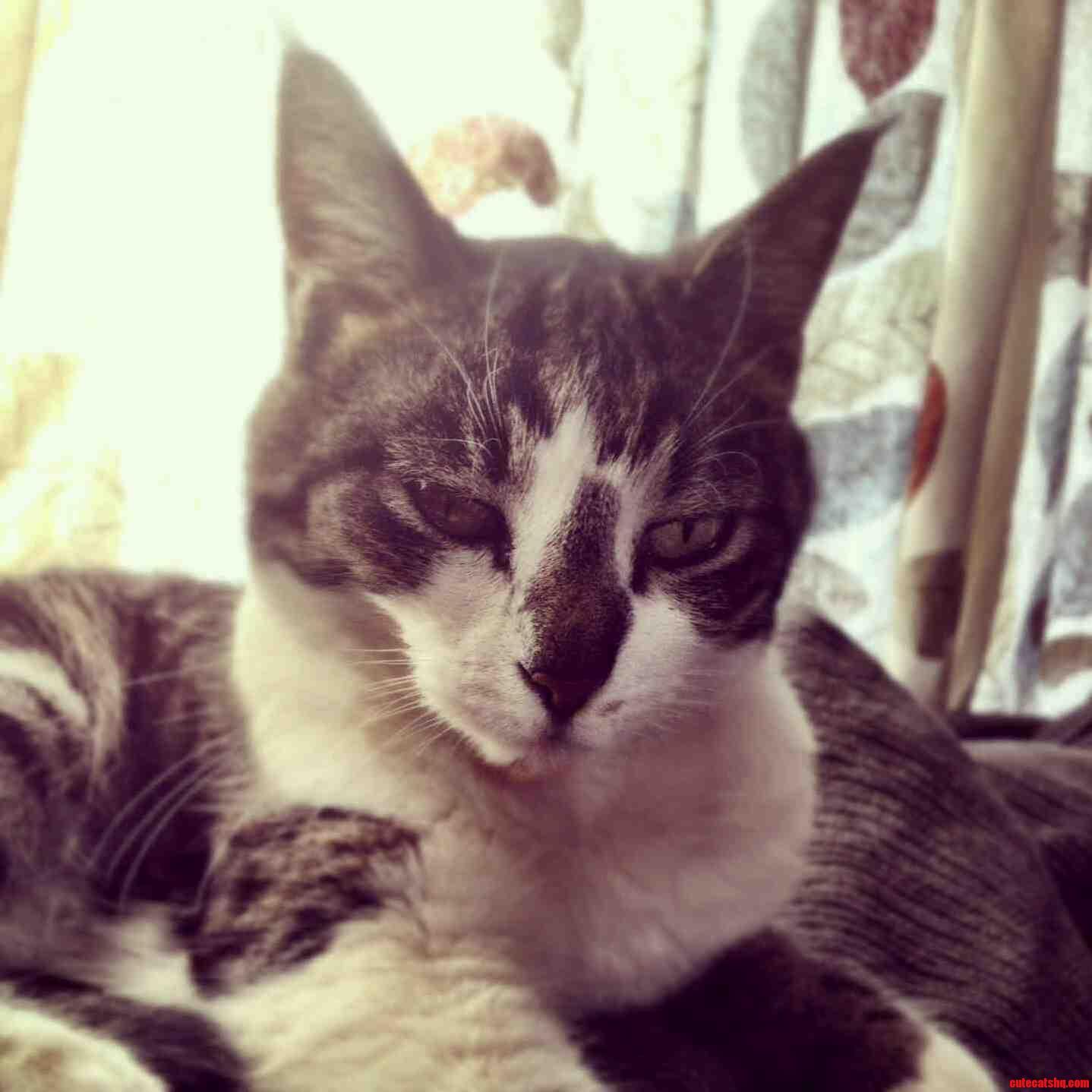 This Is Kitty Ann.