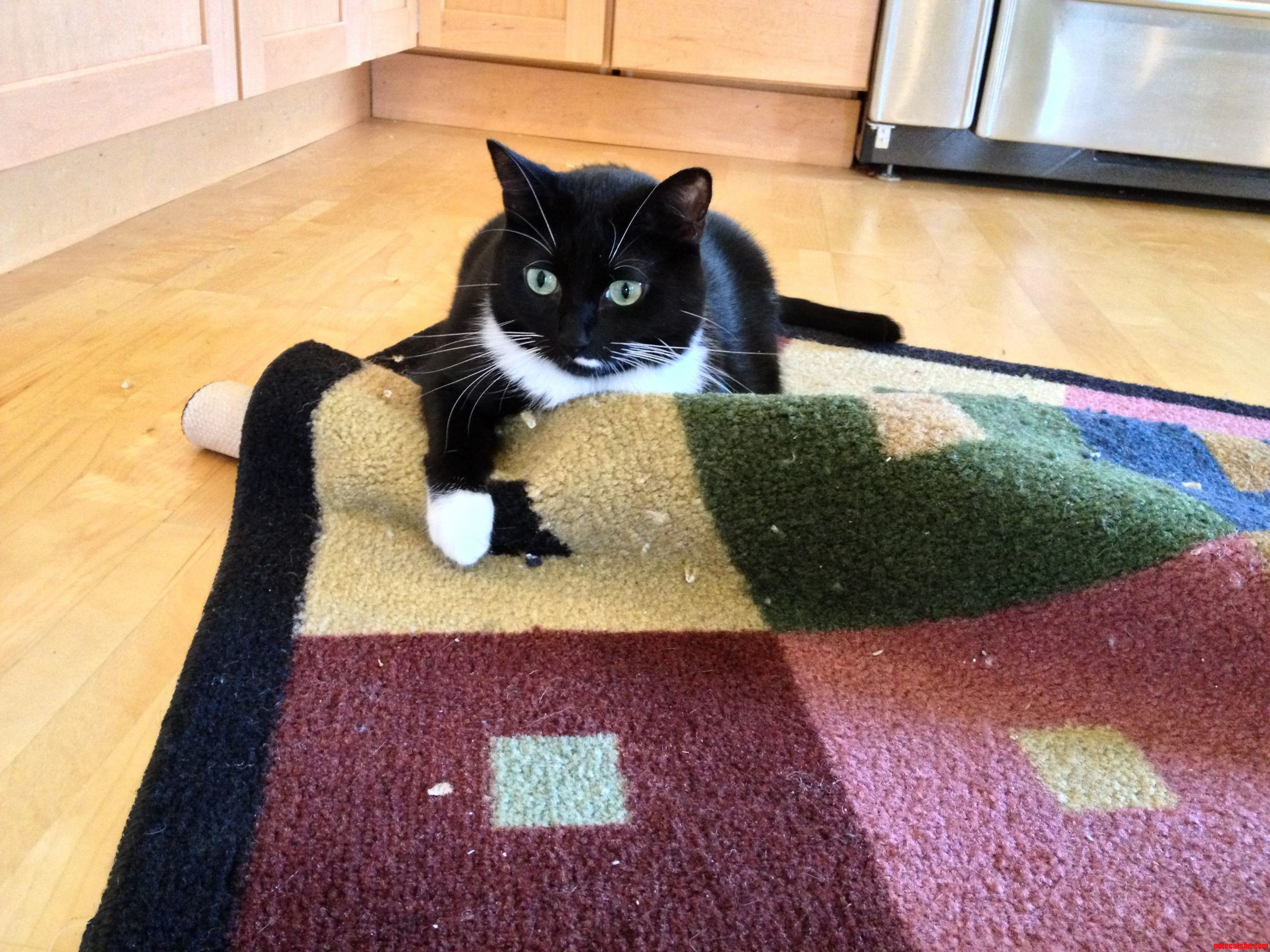 This Is Mah Rug. Mine