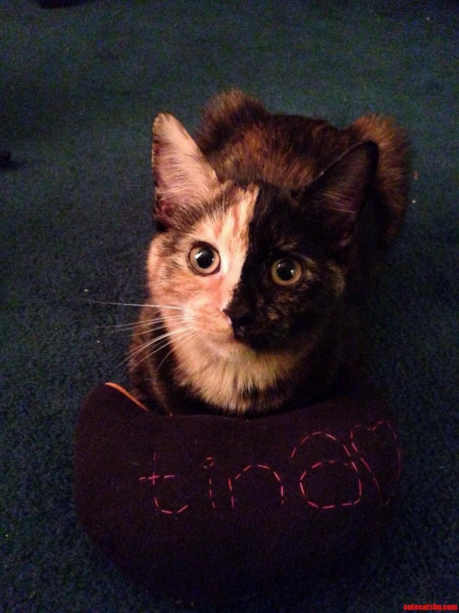 Tina And Her Ridiculous Face.