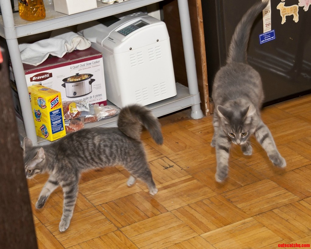 Toronto Cat Rescue Kittens Yoko And Lennon Defying Gravity