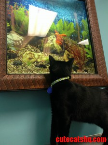 Voodoo Watching The Fish At His First Vet Visit.