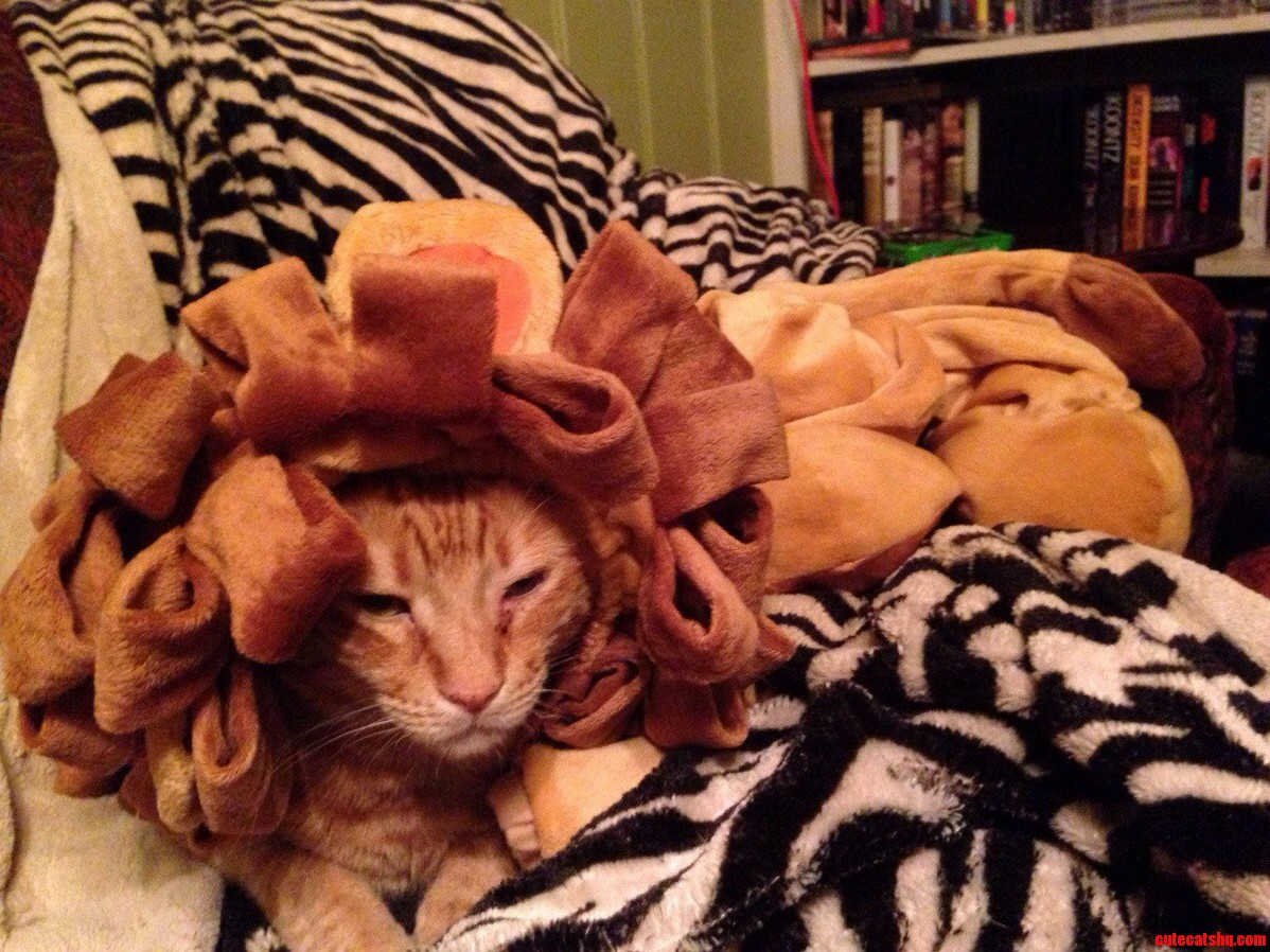 We Still Had Our Daughters Costume Laying Out. Brodie Is A Fierce Kitty.