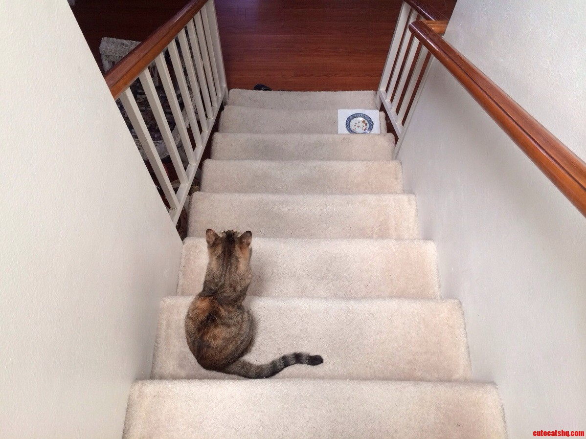 Whenever I Stop Walking Down The Staircase She Stops Too.