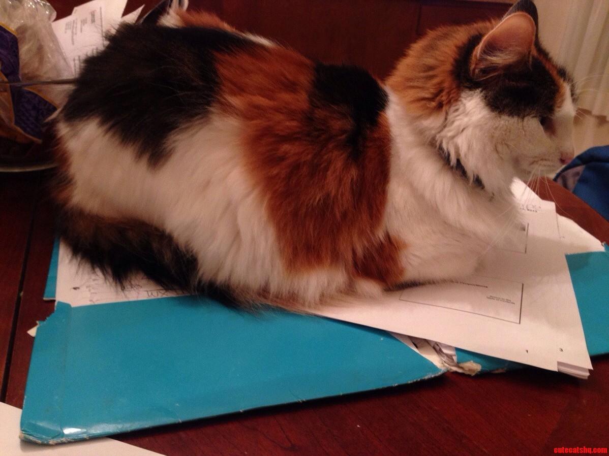 Why I Dont Do My Homework