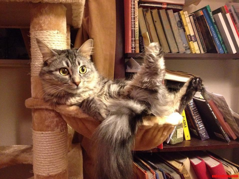 Wot Is This Not The Way Cats Normally Sit