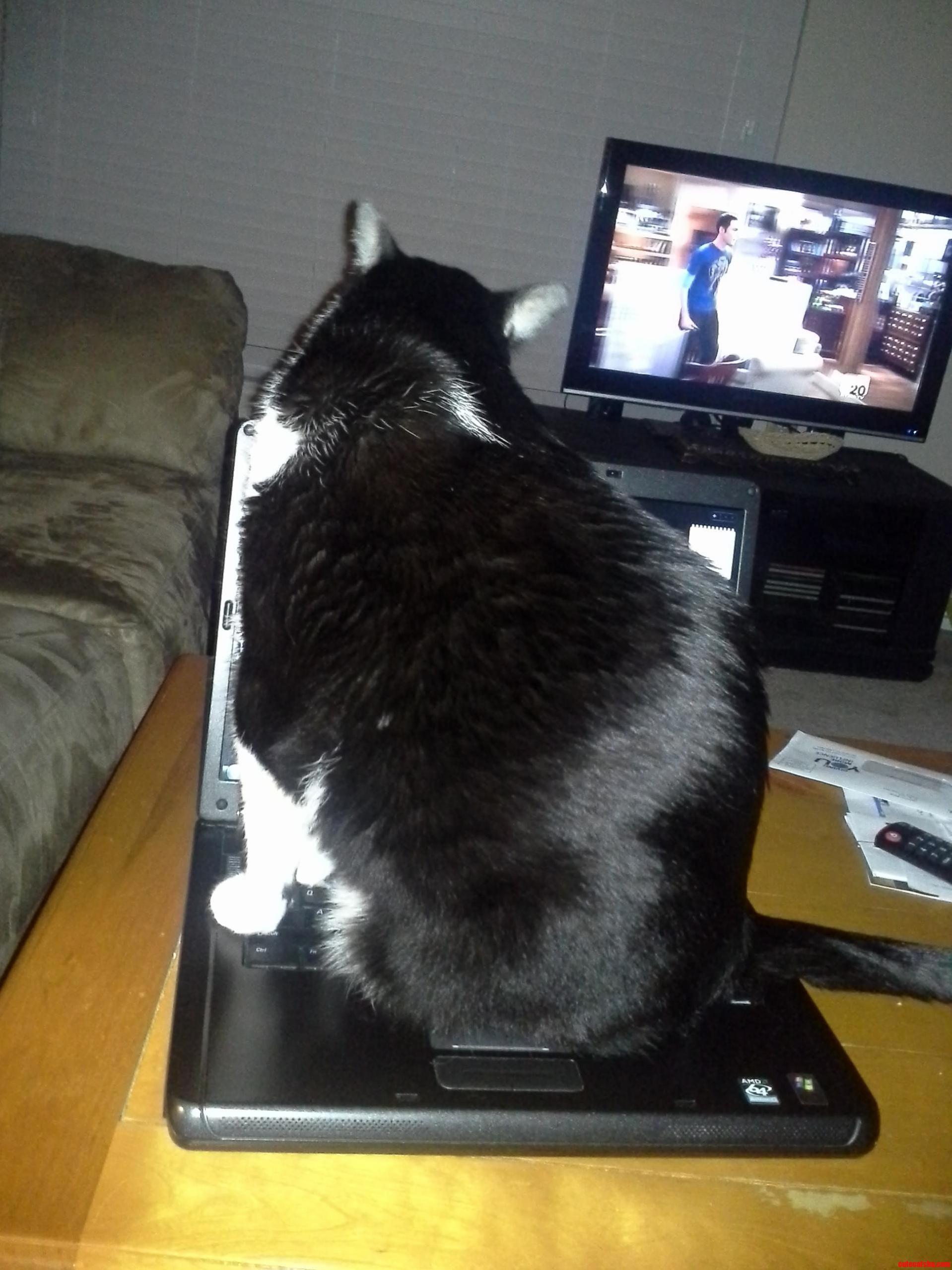 Yep. Even Big Kitties Do It.