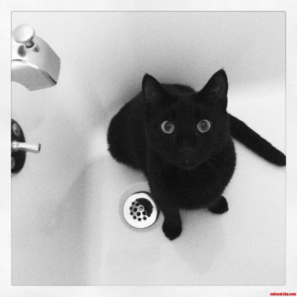 Zephyr Likes The Tub