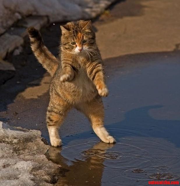 A Very Cute Street Cat