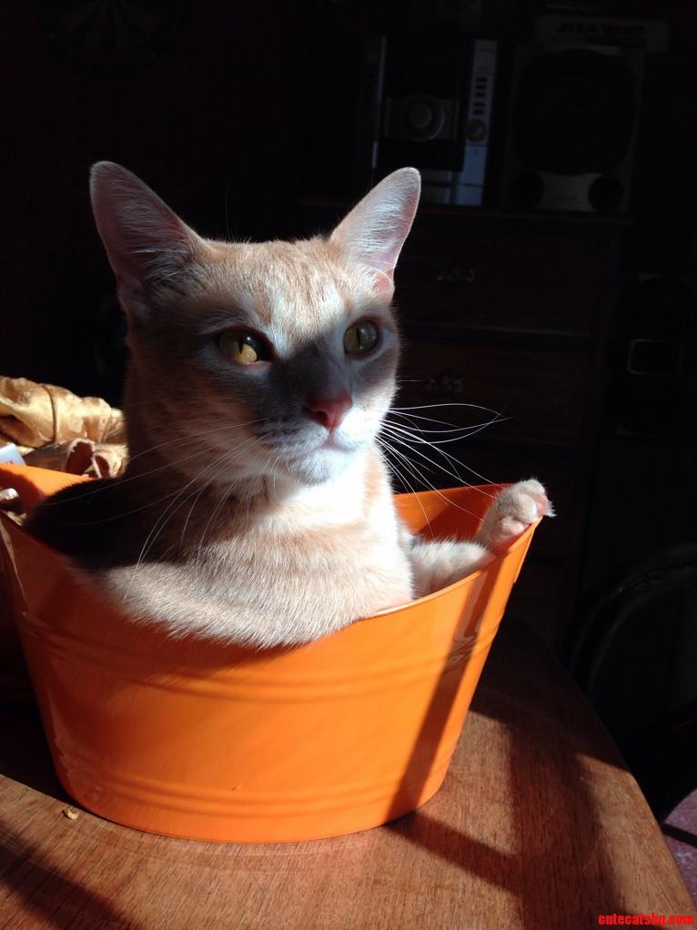 A Warming Basket.