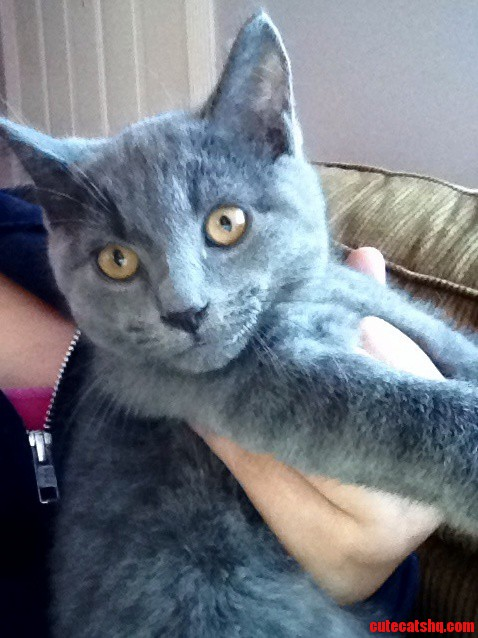 Anyone Know What Type Of Kitten This Is He Is A Dark Ironish Grey.