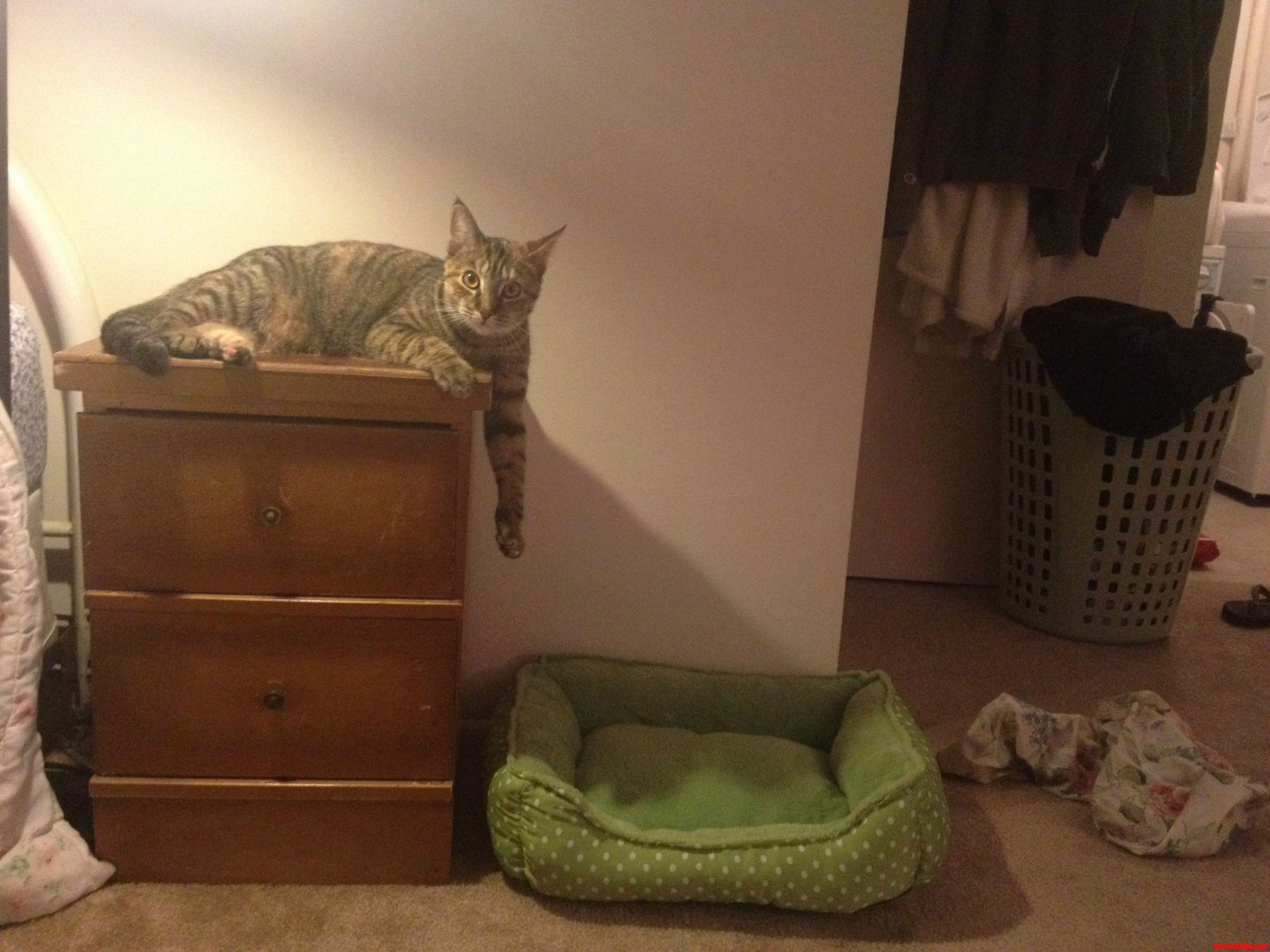 Bought A Nightstand And A Catbed. Guess Which One She Sleeps On.