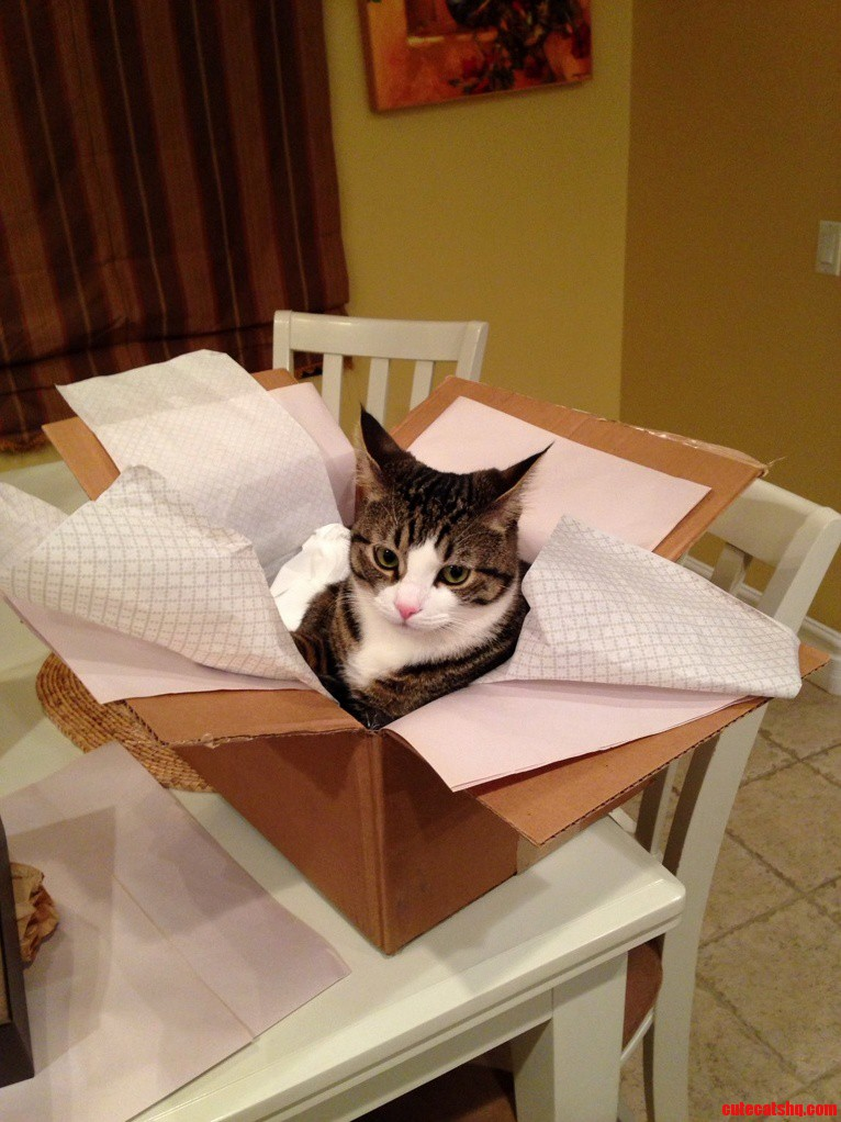 Came To Visit Folks Because They Said I Got A Package In The Mail. Within Seconds After Opening…