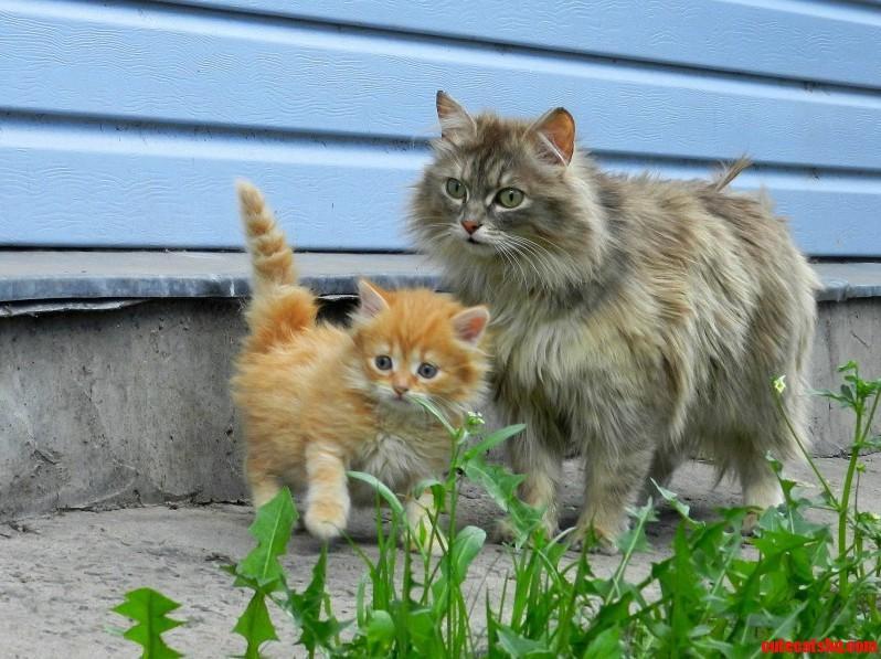 Cat And Kitten. Aelita And Sunny Solnyshko