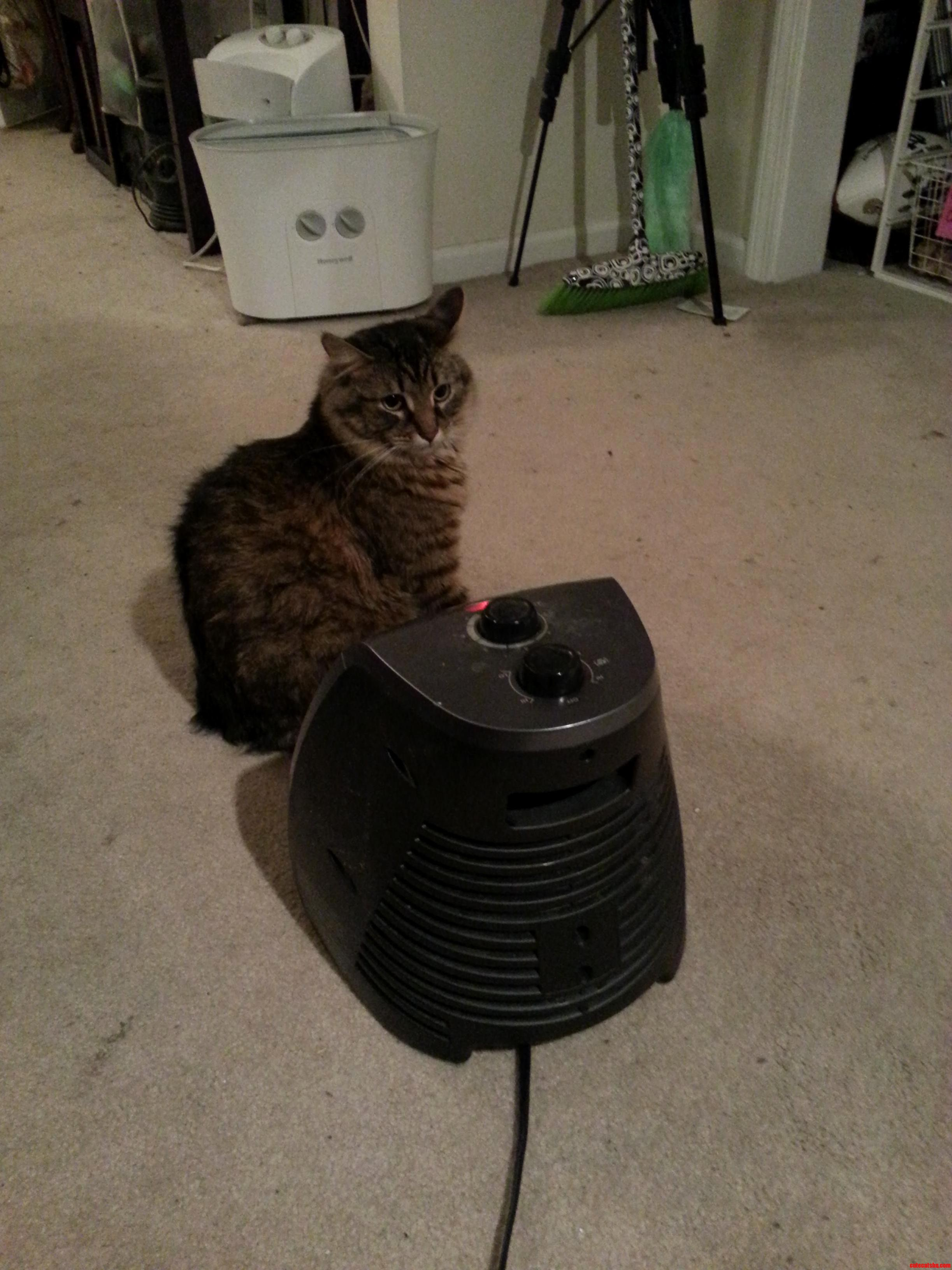 Cat And Space Heater Best Friends.