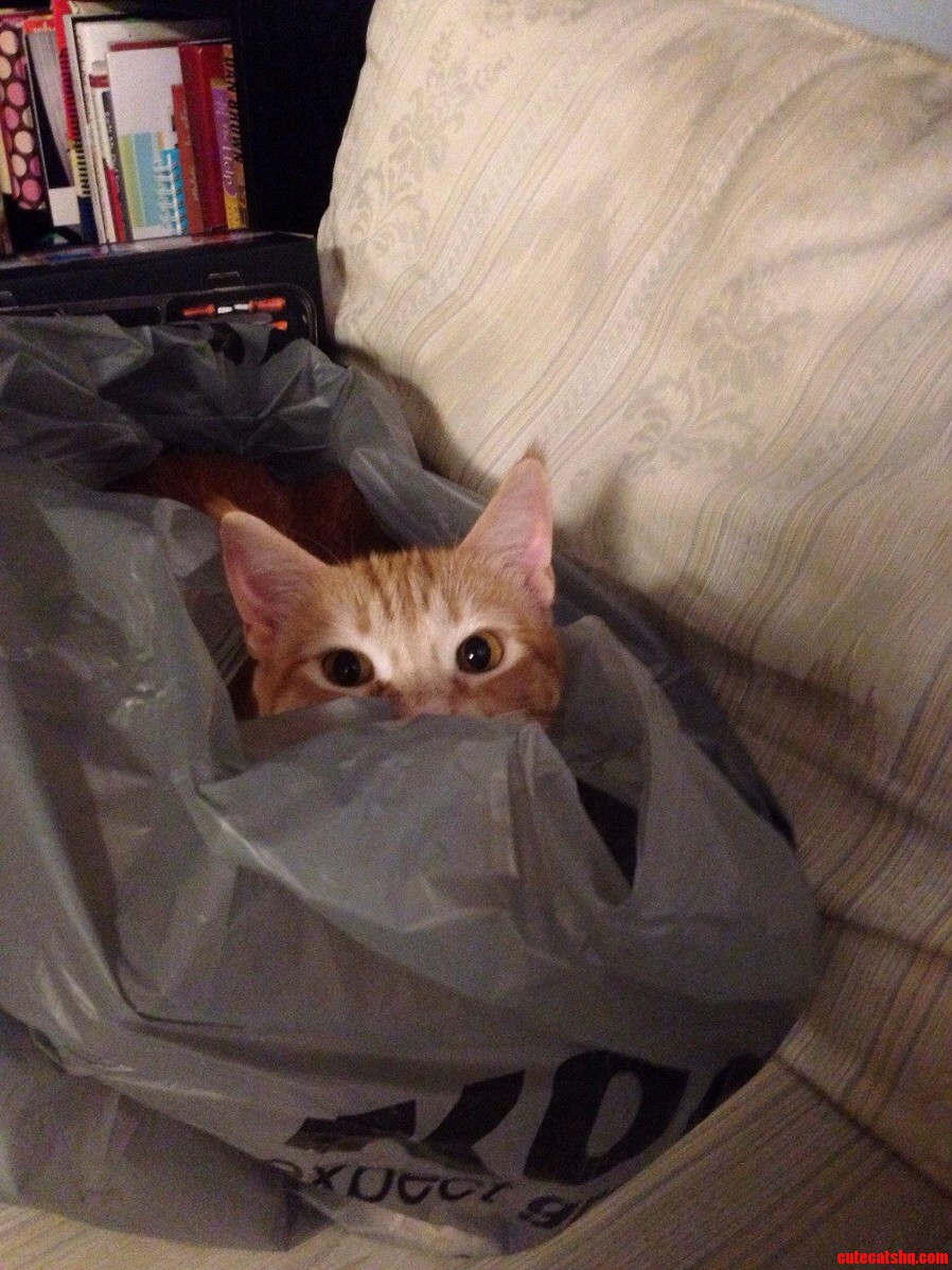 Cats Out Of The Bag Nope-Cats In The Bag