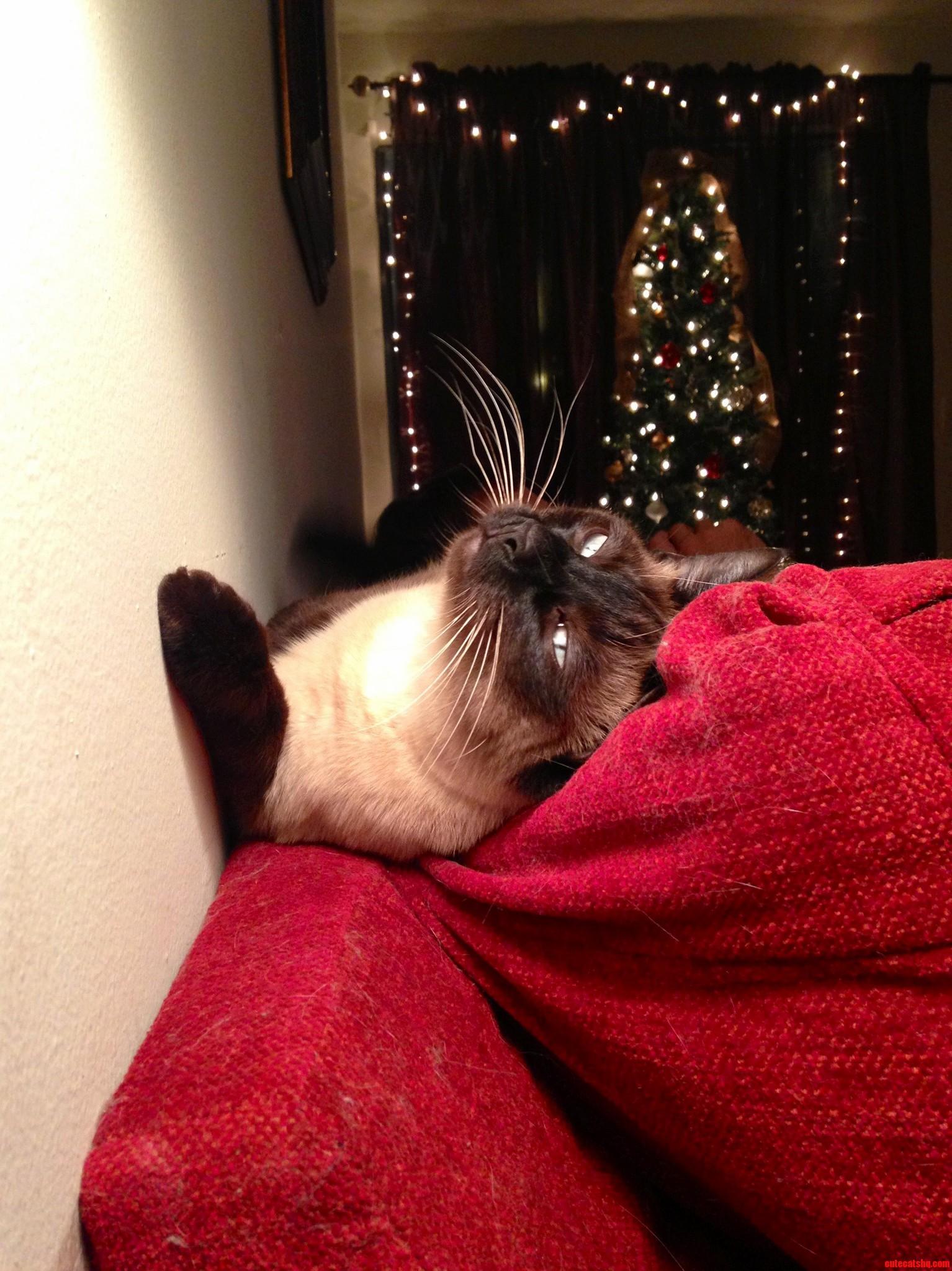 Christmas Bask. Loving Life…