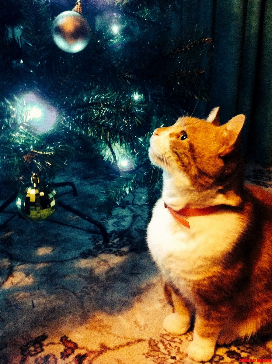 Christmas Is Magical For All…
