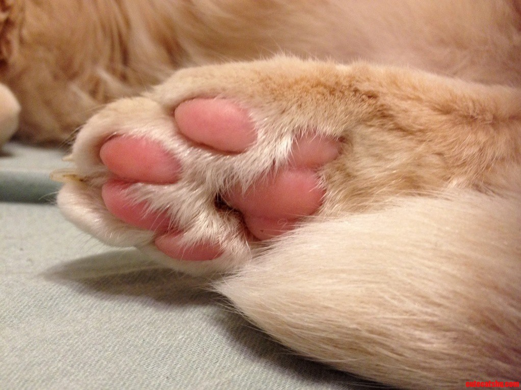 Clever Title For A Paw..