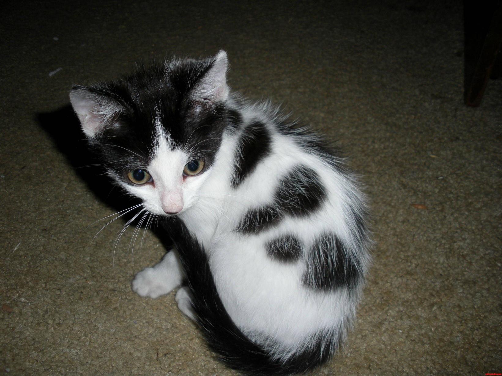 Daisy My Rescue Kitty