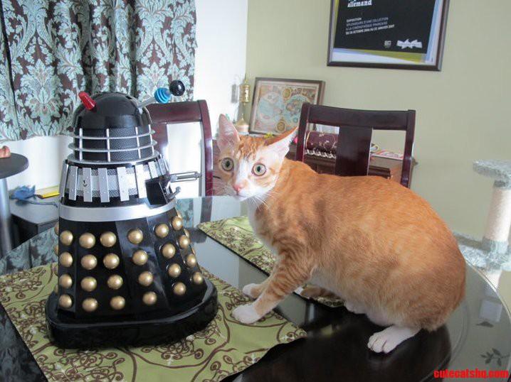 Dalek Vs Cat